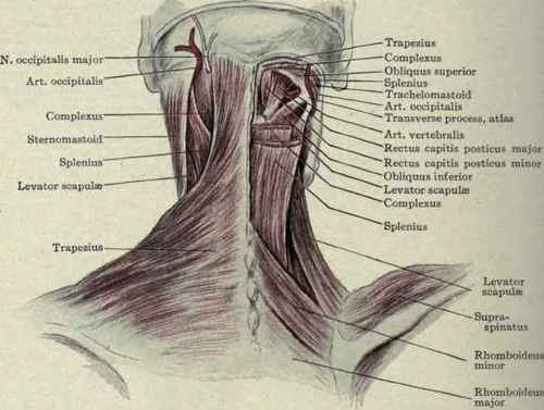 Lymphatics Of The Neck Part 3