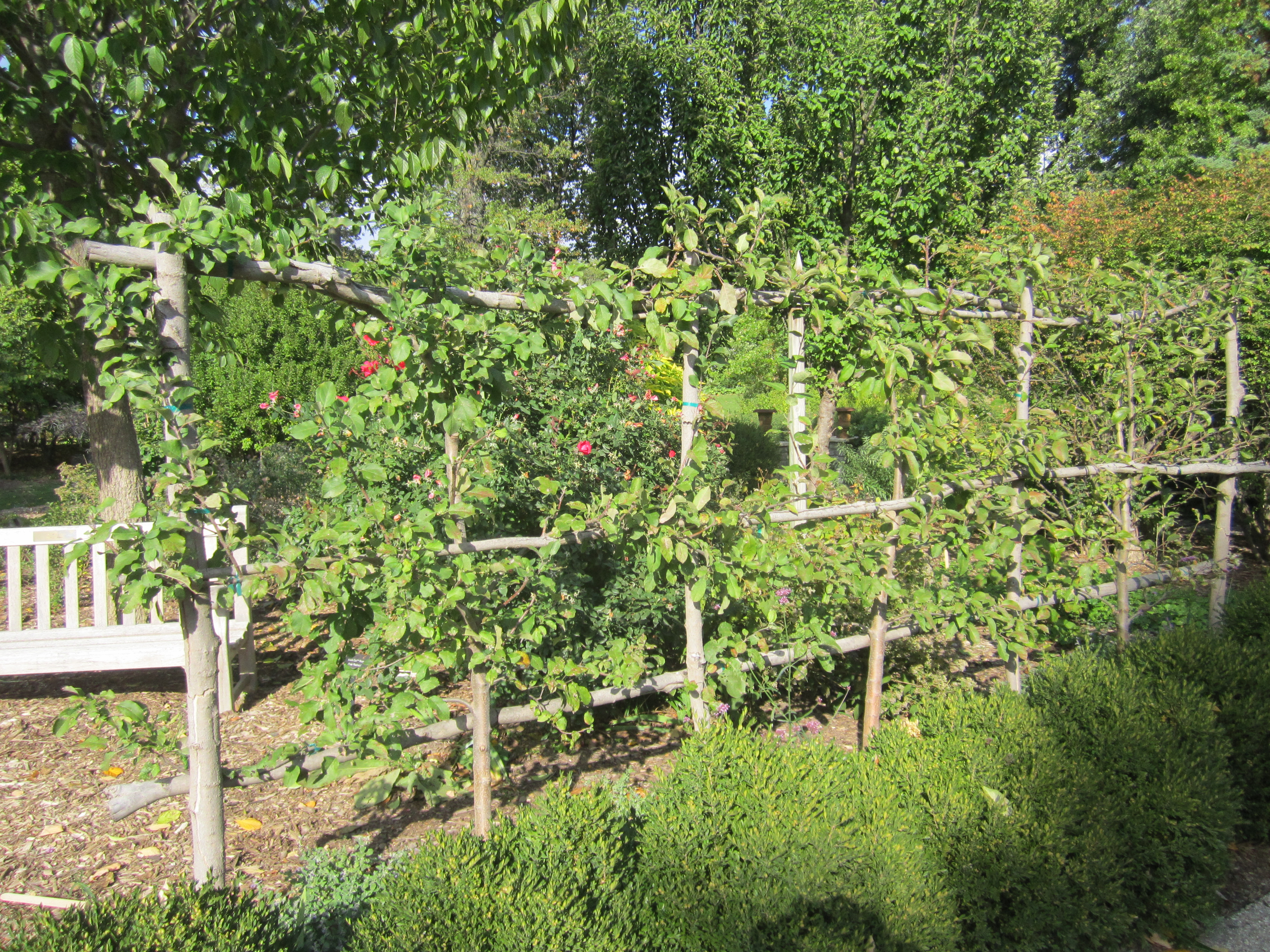 Garden Trees Openlands Fruit Nut Tree Distribution Want Fruit Trees In Your