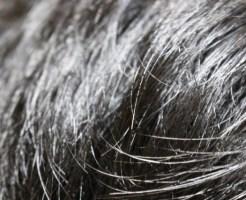 白髪の治る食べ物は黒ごま?サプリやストレスの影響