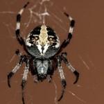 家の蜘蛛対策、おすすめの予防方法