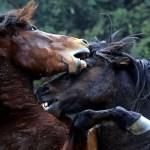 horse-title