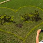 02Rice-paddy-art-from-China