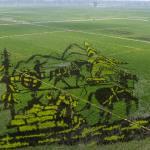 06Rice-paddy-art-from-China