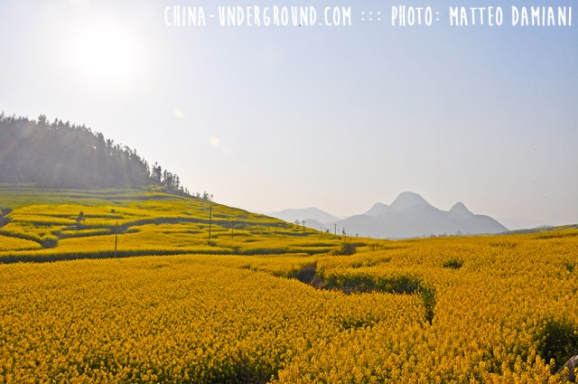 Luoping-053
