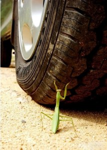 """""""Don't you know about the praying mantis that waved its arms angrily in front of an approaching carriage,"""" warned the philosopher Zhuangzi, """"unaware that they were incapable of stopping it? Such was the high opinion it had of its talents"""" (Burton Watson, trans.). Images of the angry mantis facing a car wheel are circulating online today."""