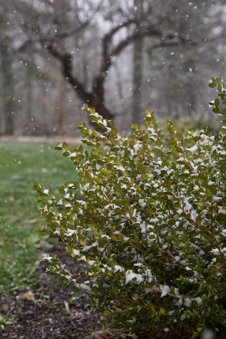 snow in april 2