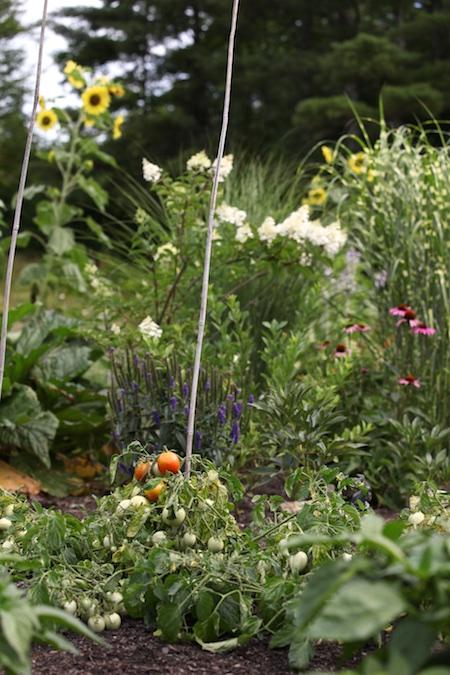 nursery garden area 1