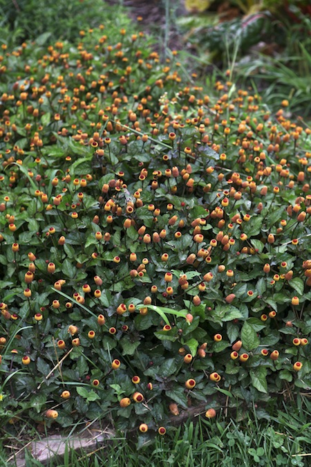 shelburne farms edible gardens 2