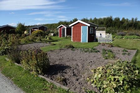 swedish_community_garden-2