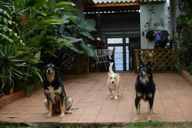 Quintal dos Focinhos: seu cão vai se sentir em casa