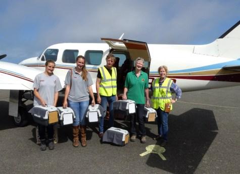 Six choughs ready for their longest flight so far