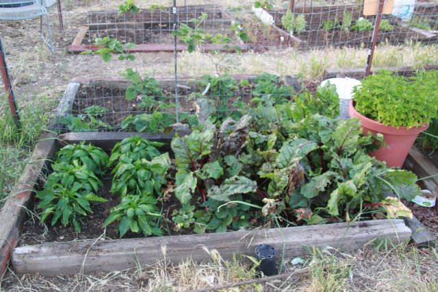 photo of beets & bell peppers bed