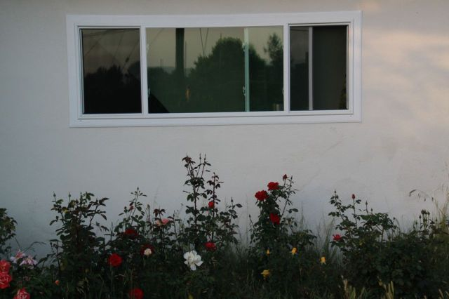 Window and the Roses