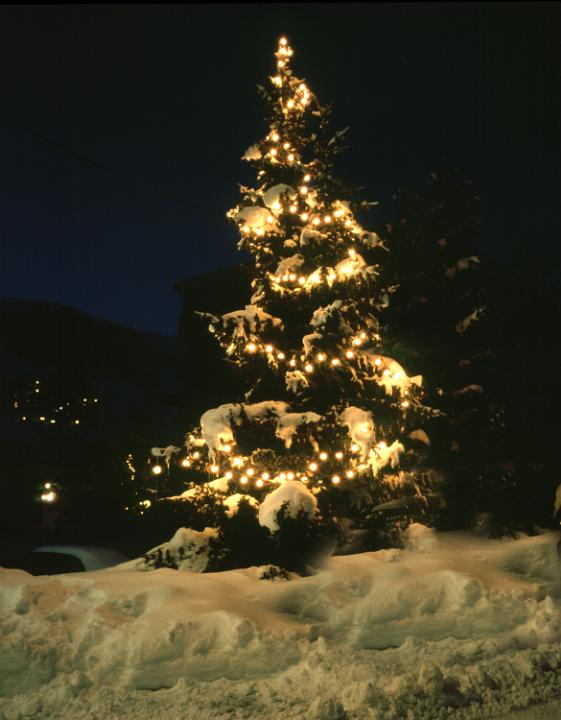 Quotes Wallpaper Free Download Photo Of Christmas Tree In Snow Free Christmas Images