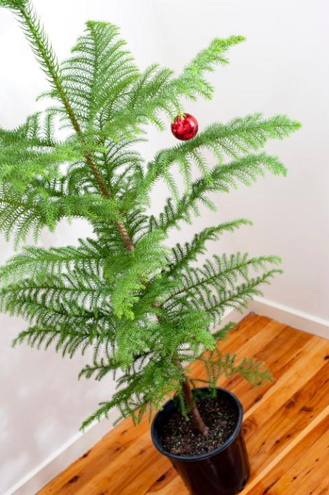 free christmas tree images