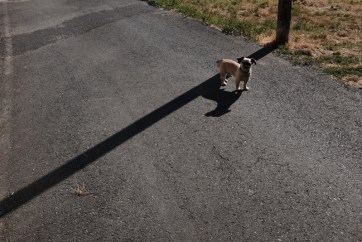 single dog on path camino de santiago