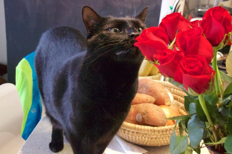 Cat sniffing roses