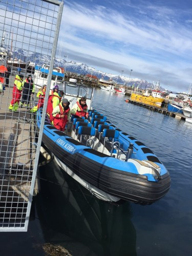 Whale watching at Husavik