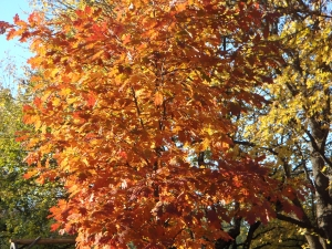 fall-leaves-1432748-2-m
