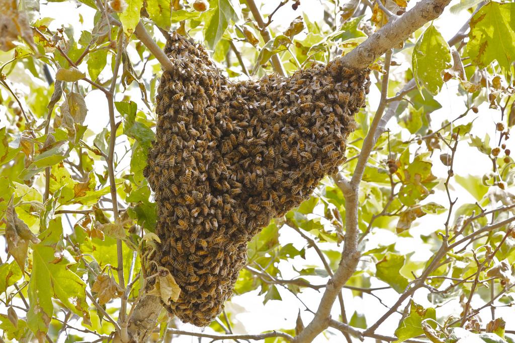 beehive in el chorro park