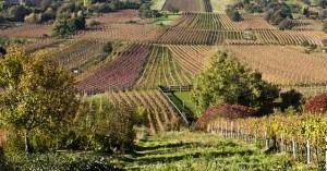 wine-259876_640