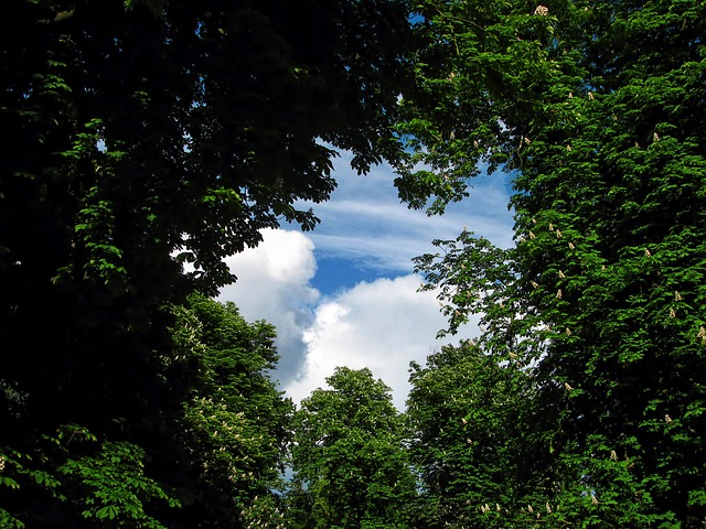 tree-220664_640
