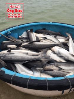 Giá mua bán cá Bớp biển hiện nay bao nhiêu tiền 1 kg TpHCM
