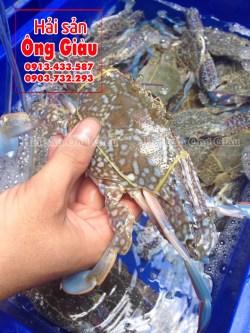 Con ghẹ biển xanh loại 2 mua ở đâu – giá bao nhiêu tiền 1kg tại