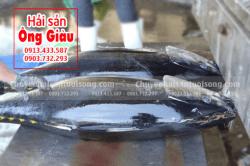Giá bán thịt phi lê – Mắt cá ngừ đại dương nguyên con Phú Yên tại TpHCM