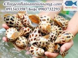 Giá mua bán Ốc Hương hôm nay bao nhiêu tiền 1 Kg ở TP HCM