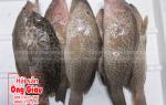 Giá mua bán cá song bao nhiêu tiền 1kg ở TpHCM – Sài Gòn