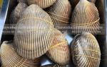 Mua Sò Dương sống ở đâu tại TpHCM – giá bao nhiêu tiền 1 kg