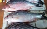 Cá cóc giá bán bao nhiêu tiền 1kg – mua ở đâu tại TpHCM