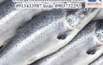 Cá hồi NaUy tươi nguyên con đặt hàng nhanh giao hàng toàn quốc