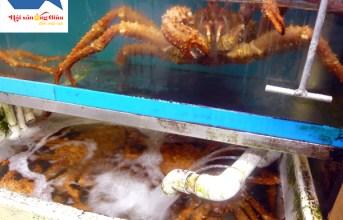 Cua King Crab là cua gì – sống ở đâu – giá tại Hà nội