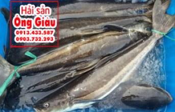Giá cá bớp năm 2017 bao nhiêu tiền 1 kg