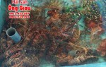 Bán hải sản Online Hà Nội giao hàng tận nơi