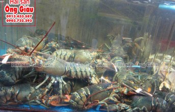 Cung cấp hải sản tươi sốnggiao hàng tận nhà Hà Nội