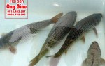 Mua hải sản tươi sống Quy Nhơn ở đâu giá rẻ