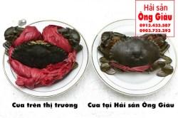 Giá cua biển Cà Mau bao nhiêu tiền – vụa cua tại TpHCM