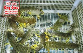 Hải sản tươi sống Phú Quốc ngon – rẻ – chất lượng