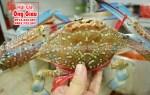 Mua ghẹ Phú Quốc tại vựa hải sản Phú Quốc ở TpHCM