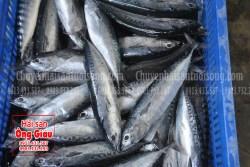 Mua cá ồ Phú Yên tại TP.HCM giá rẻ