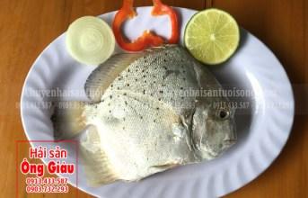 Cá bàn sa tươi ngon và các món ăn hấp dẫn
