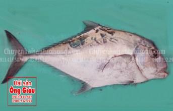 Những món ăn ngon không tưởng với cá bè lão