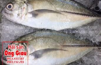 Ăn gì với cá bè lão tươi sống thơm ngon hôm nay?