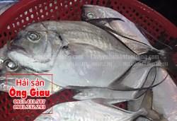 Giá bán cá bè lão tại TPHCM hiện nay