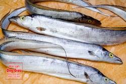 Nơi bán, giá bán cá hố tươi sống thơm ngon