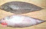 Cá lưỡi trâu, nơi bán cá lưỡi trâu thơm ngon