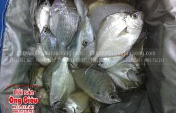 Các món ăn thơm ngon bổ dưỡng với cá bè lão